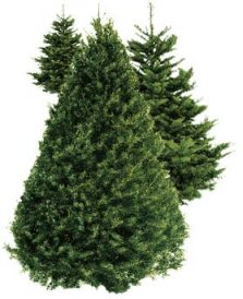 real christmas trees in orange county - Real Christmas Tree Prices